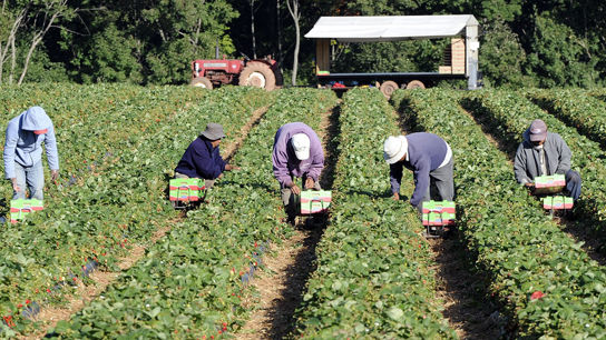 argriculture-a-la-main